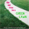 Tips and Tricks for a Green Lawn