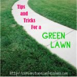Tips and Tricks for a Green Lawn, Part 1